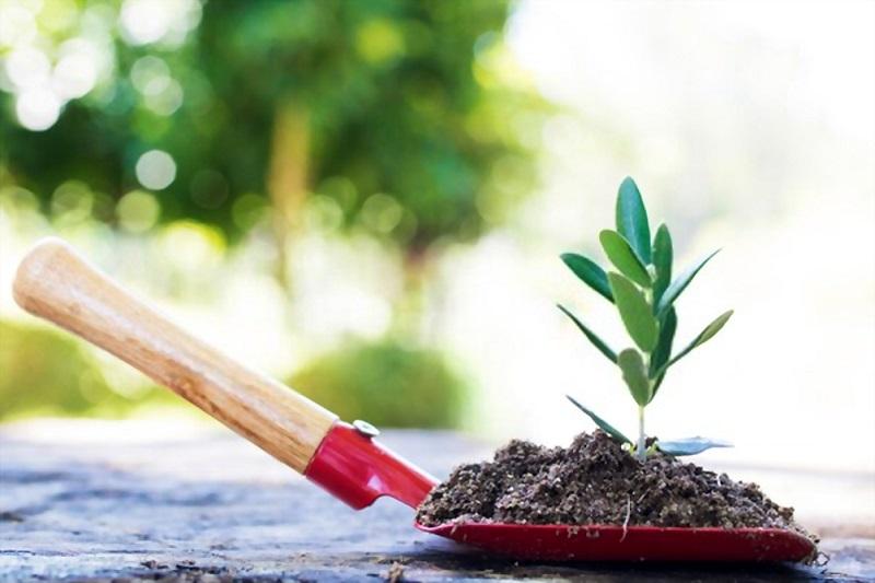 باغبانی در اجرای فضای سبز