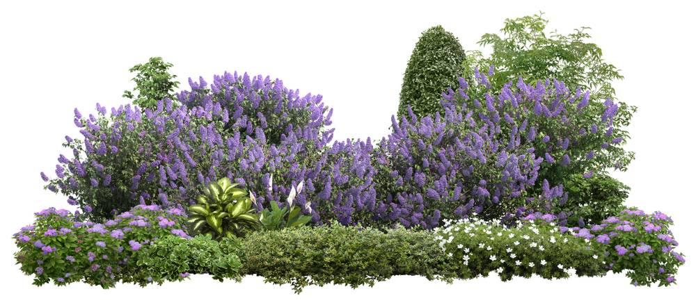 بهترین گیاهان برای محوطه