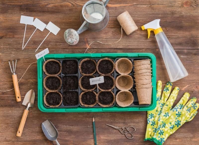 آموزش نگهداری از گیاهان و گل های آپارتمانی